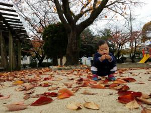 公園で落ち葉と遊ぶ孫