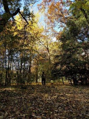 雑木林での長男と孫