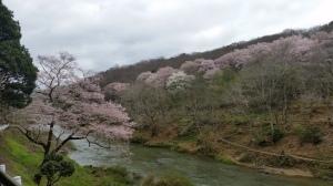まもなく桜の季節だ