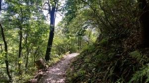 ほしだ園地「松風の道」快走路