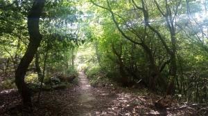 木漏れ日の雑木林を走る