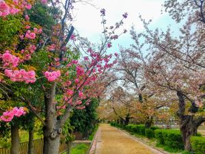 葉桜になった